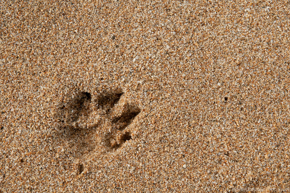 A dog's paw print in the sand