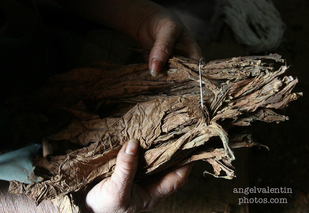 (aev) cubacigars02f------Pinar del Rio, Cuba-----3.2.07-----<br /> Dry tobacco leaves in a farm in Cuba's Pinar del Rio, known for it's cigar plantations.<br /> Staff Photo/Angel Valentin