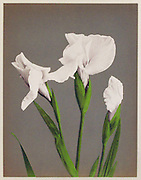 Ogawa Kazumasa 小川 一眞<br />