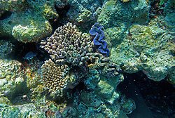 Giant Clams and corals at the Rowley Shoals.