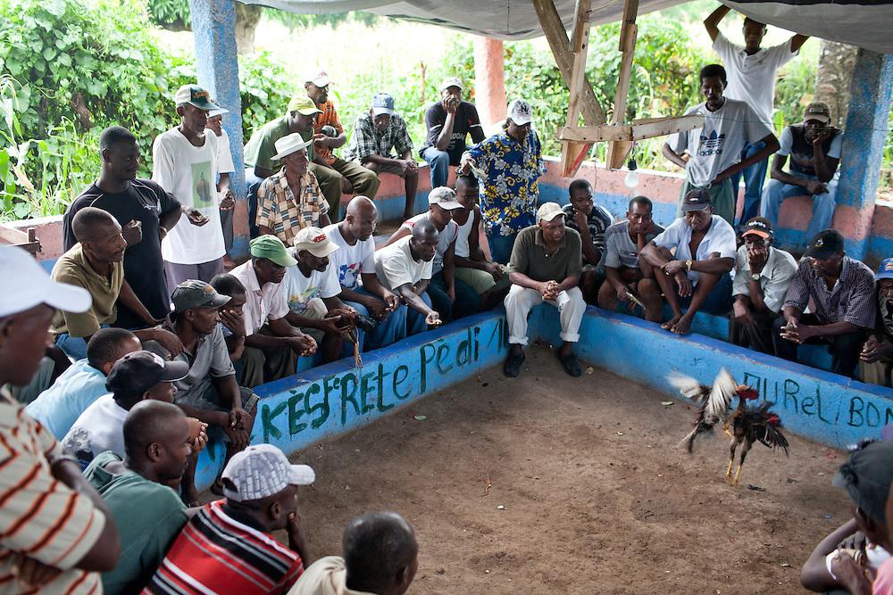 Men watch a cock fight on July 15, 2010 in Solon, Haiti.