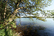 Mindelsee, Halbinsel Bodanrück, Bodensee, Baden-Württemberg, Deutschland