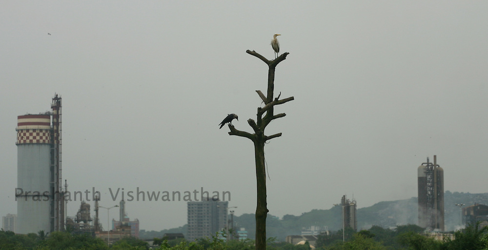 Birds perch on a dead tree stump in front of chemical factories in Mumbai, India, on Wednesday, September 19, 2007. Photographer:¬+ Prashanth Vishwanathan/Bloomberg News¬+