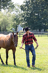 cowboy with a horse on a ranch