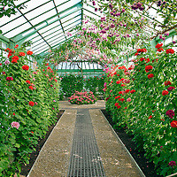 Belgian Royal Greenhouses, Laeken, Brussels Stock Photos