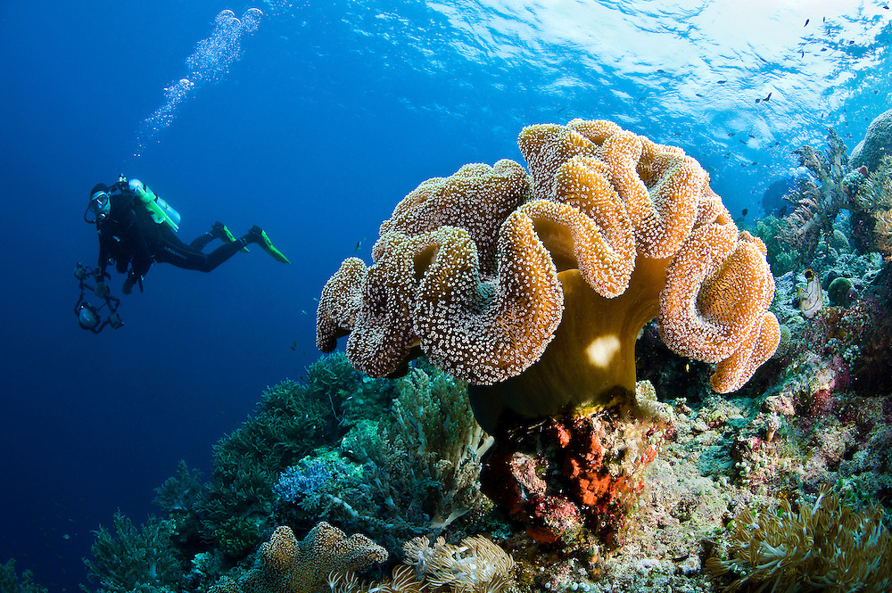 Coral reefs and mangroves in Raja Ampat