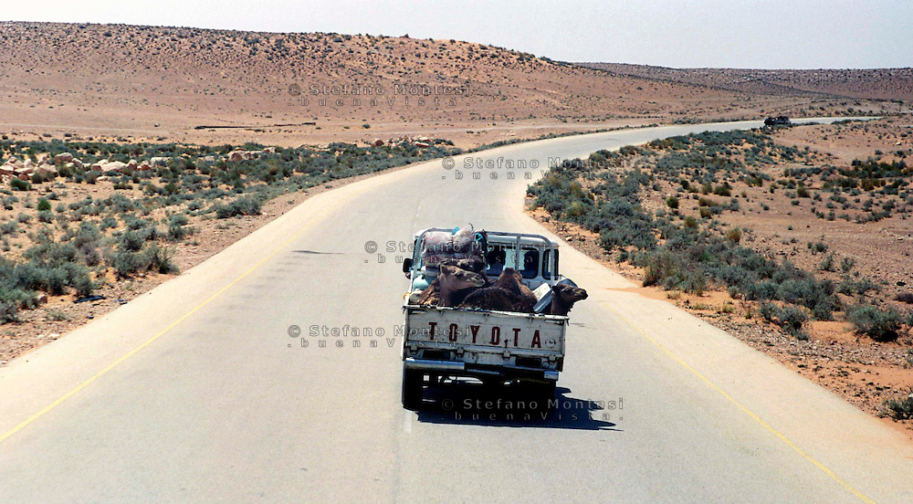 Libia, Ghadhames 2002.Un pick-up trasporta cammelli , sulla strada che porta verso il deserto..Libya, Ghadhames 2002.A pick-up carrying camels on the road to the desert