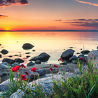 Red flowers by the shoreline at sunset
