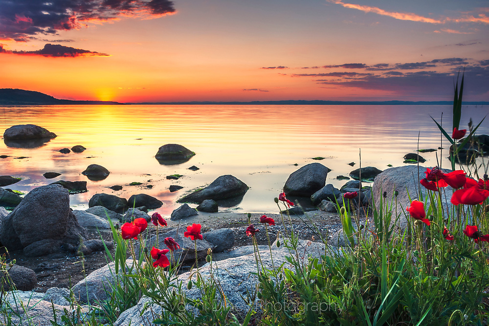 Stunning sea scene with poppies by the coast