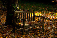 A teak garden bench covered with autumn leaves.