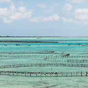 Offshore pens where conch are raised in Providenciales, Turks and Caicos. Each pen contains approximately 5,000 conch which are harvested at an age of 3-4 years. The pens are designed to exclude predators such as stingrays, porcupine fish and turtles.