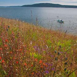 Yellow Island Preserve, San Juan Islands, Washington, US