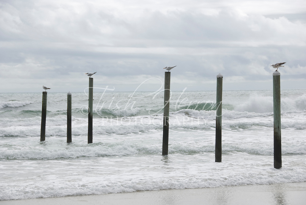 Four gulls rest on top of pilings in the surf before cloudy skies