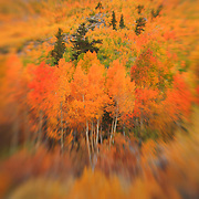 Table Mountain - Fall Color -  Lensbaby
