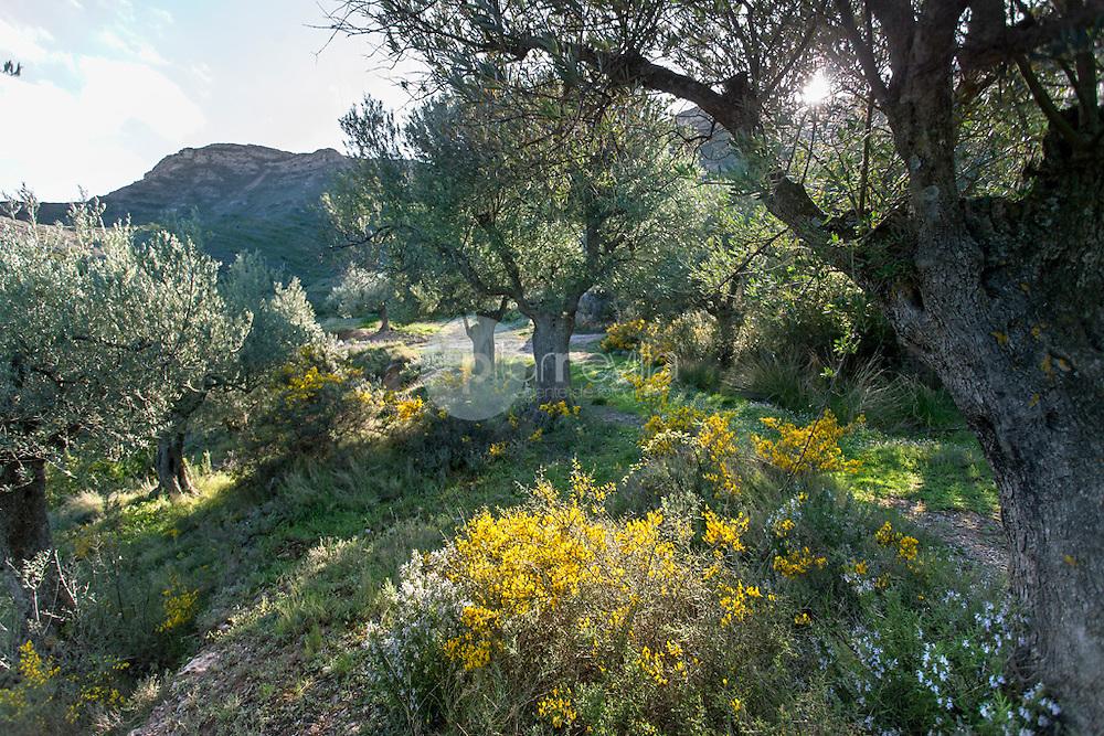 Olivar. Valle del Jubera. LA Rioja ©Daniel Acevedo / PILAR REVILLA