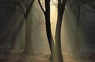 BEL, Belgium, Eastbelgium, forest south fof the city of Eupen, Hautes Fagnes.....BEL, Belgien, Ostbelgien, Wald suedlich von Eupen, Hohes Venn....... ..