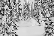 Monochrome image of Pro Snowboarder Curtis Ciszek snowmobiling through some of the deepest snow that the British Columbia backcountry has to offer near Revelstoke in the Eagle Pass zone