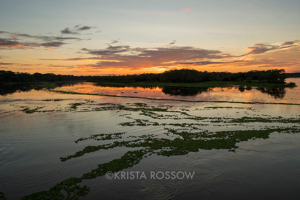 Water lettuce plants make patterns on the Yanayacu River during a beautiful sunset. Pacaya Samiria National Reserve, Upper Amazon, Peru.