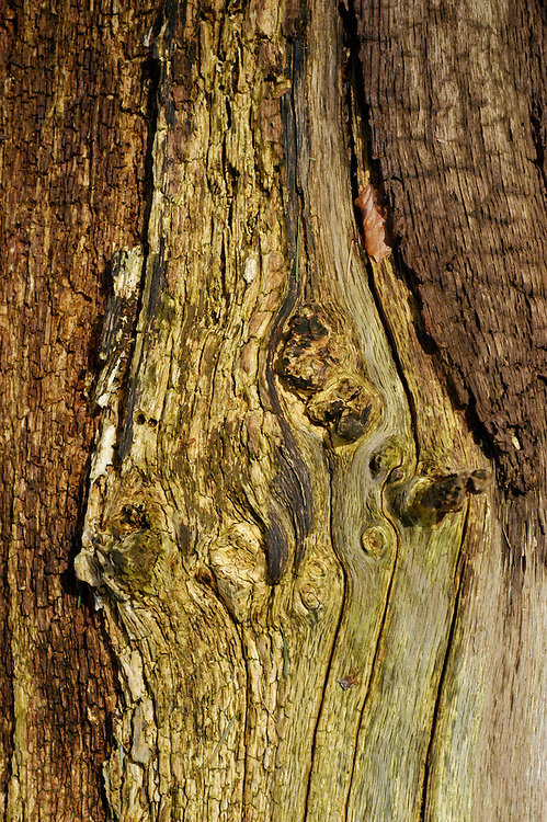 wood composition