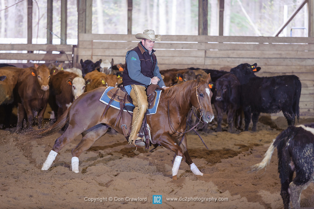April 30 2017 - Minshall Farm Cutting 2, held at Minshall Farms, Hillsburgh Ontario. The event was put on by the Ontario Cutting Horse Association. Riding in the 25,000 Novice Horse Non-Pro Class is Eric Van Boekel on Love That Dog owned by the rider.