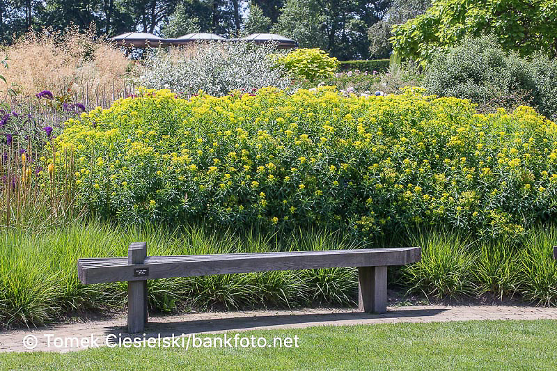 Modern wooden bench in front of summer border