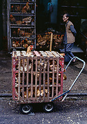 Box of Chickens, Kowloon, Hong Kong, 1990