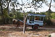 Indonesia, Lombok, Bugi island, horse car