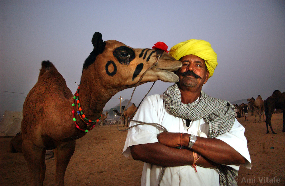 Jelha Ram, a camel trader from Nagor, India lstands with one of his camels as sun sets at the largest camel fair in the world in Pushkar, India in the state of Rajasthan. Thousands of camels and traders come to the annual event which some say has been going on for centuries.