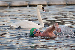 © Licensed to London News Pictures. 05/12/2016. London, UK. A swimmer passes a swan in the Serpentine, Hyde Park at first light. Another week of freezing temperatures is forecast for parts of the United Kingdom. Photo credit: Peter Macdiarmid/LNP