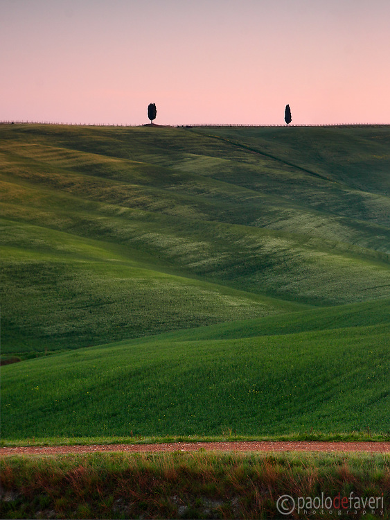 Rolling hills, crop fields and lonely trees, the typical Tuscan country side. Taken at in the fields between San Quirico d'Orcia and Montalcino.