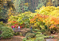 Autumn brings changing color, visitors, and photographers to Portland's famous Japanese Tea Garden. (Colors are natural; not enhanced in Photoshop).