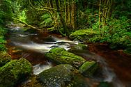Australia, Tasmania, Franklin-Gordon Wild Rivers National Park, Creek