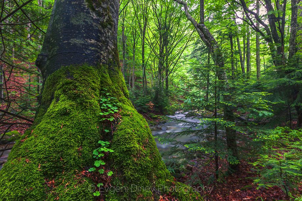 Stara Reka reserve