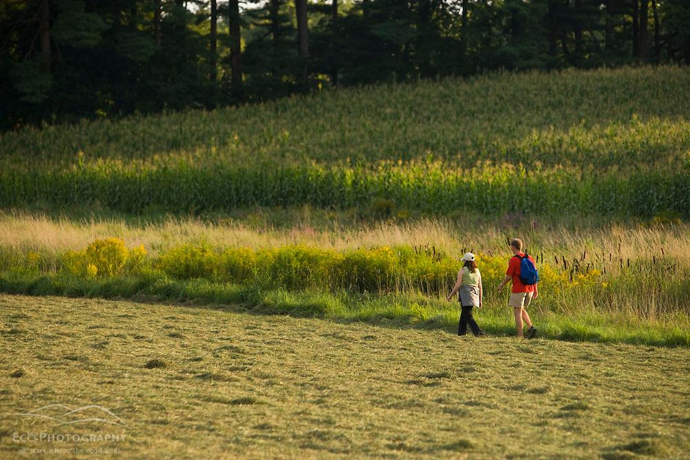 Walking in a field on a farm in Pepperell, Massachusetts.