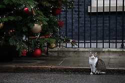 © Licensed to London News Pictures. 17/12/2019. London, UK. Larry the cat in Downing Street this morning. Photo credit : Tom Nicholson/LNP