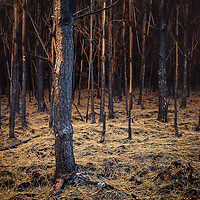 Golden thread covering the charred floor of the forest