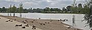 Mannheim. 04.07.16 Rhein. Strandbad. Kolonien von Gänse breiten sich am Strandbad aus.<br /> Bild: Markus Prosswitz 04JUL16 / masterpress (Bild ist honorarpflichtig - No Model Release!)