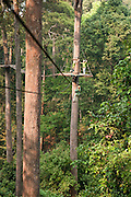 Jungle Flight zip line and forest canopy tour, Chiang Mai, Thailand.