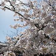 Kyoto spring 2018
