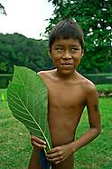 Parara Puru Embera
