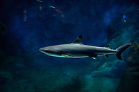 Aquarium de Lyon, requin.<br /> Shark