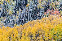 First snow of the autumn season in the San Juan Mountains.  Viewed from along the Million Dollar Highway.   Colorado.