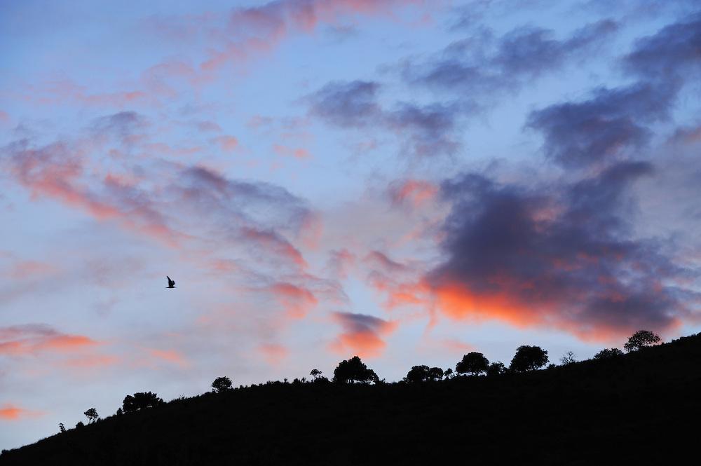 Gull against evening-sky. Butrint, Albania June 2009