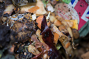 A detail of rotting vegetables in a garden compost bin.