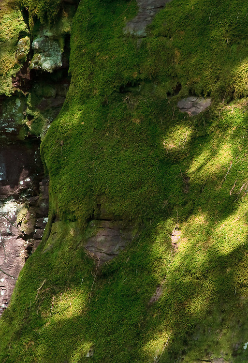 A thick carpet of moss covers canyon wall.