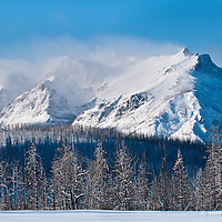 glacier national park winter scortched trees red eagle file near divide mountain photographs of large mountainscapes from the western united states, north America, Canada, rocky mountains