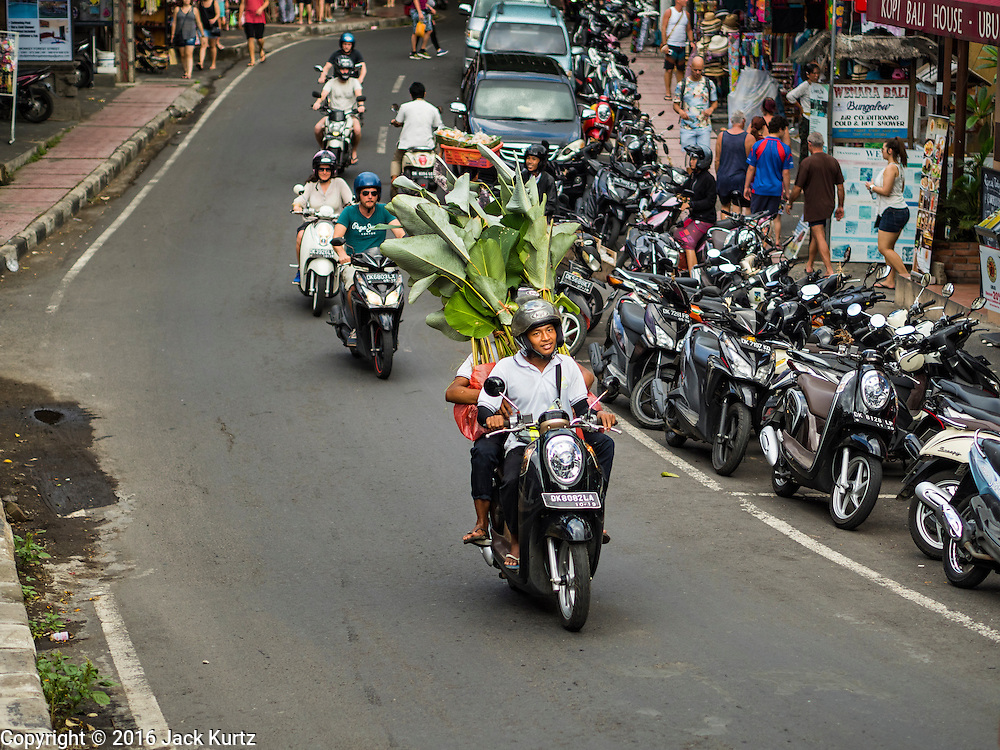 17 JULY 2016 - UBUD, BALI, INDONESIA: A man with banana trees on a motorcycle on Jalan Wenara Wana, also known as Monkey Forest Road, in Ubud, Bali.       PHOTO BY JACK KURTZ