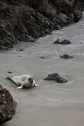 California Sea Lion on Beach