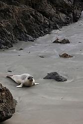 California Sea Lion on Beach