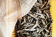 Cetara, Italia - Vincenzo Nettuno ritratto all'interno della sua azienda a Cetara. La Nettuno &egrave; rinomata per la produzione della colatura di alici. Condimento meraviglioso per la pasta. Il condimento sprigiona il vero sapore del mare.<br /> Ph. Roberto Salomone